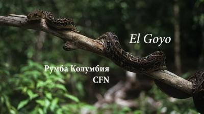 Эль Гойо исполняет румбу Колумбию с CFN