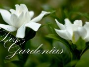 Dos gardenias — Isolina Carrillo