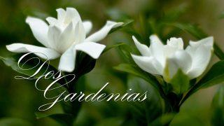 Dos gardenias — Isolina Carrillo